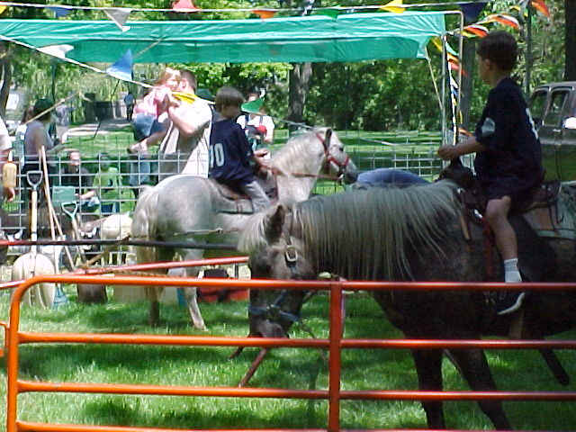 Company picnic in the park with ponies and petting zoo